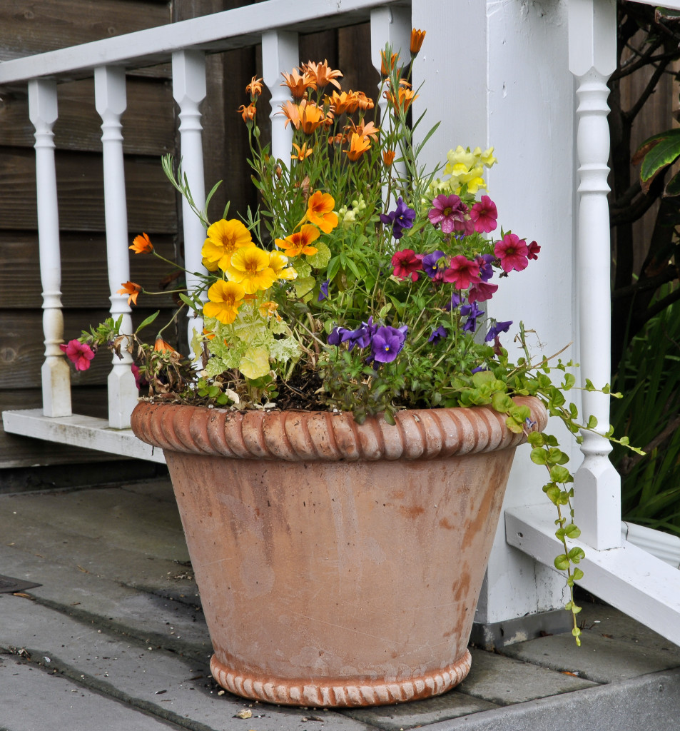 containers | southern lawn